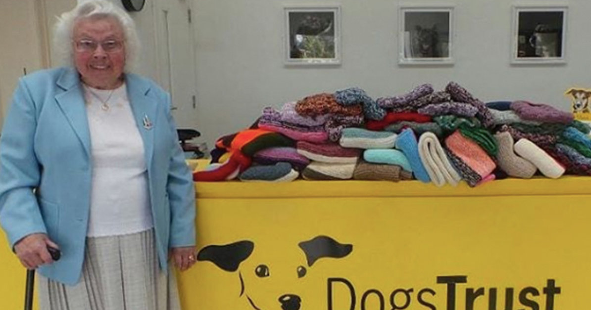 PHOTOS. A kind and heartwarming  story about an old woman who knitted 450 doggy coats and blankets for the sheltered animals