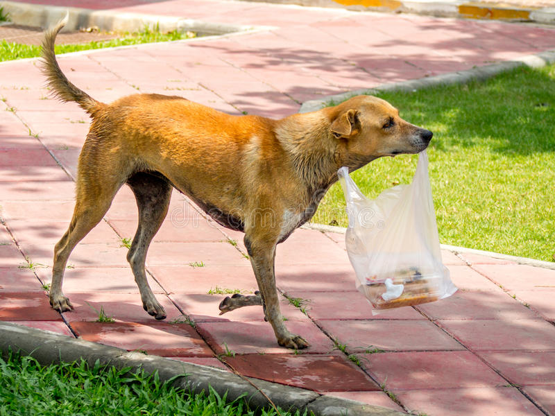 Photo. A hero dog: A touching story about a dog who carried  food for his owner every day