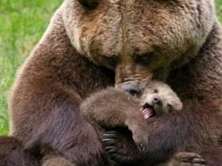 An interesting story. What happened the time when the girl approached to the bears