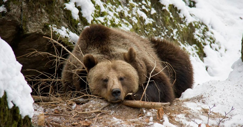 How could a fluffy bear keep warm and rescue the 3 years old boy who was lost in the forest